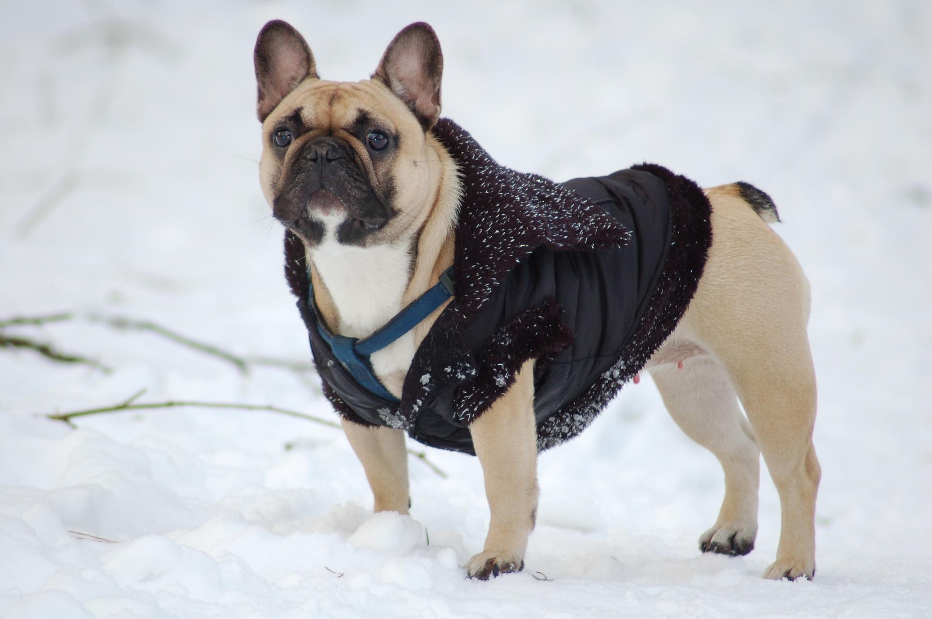bulldog-16363461920-1607341275.jpg