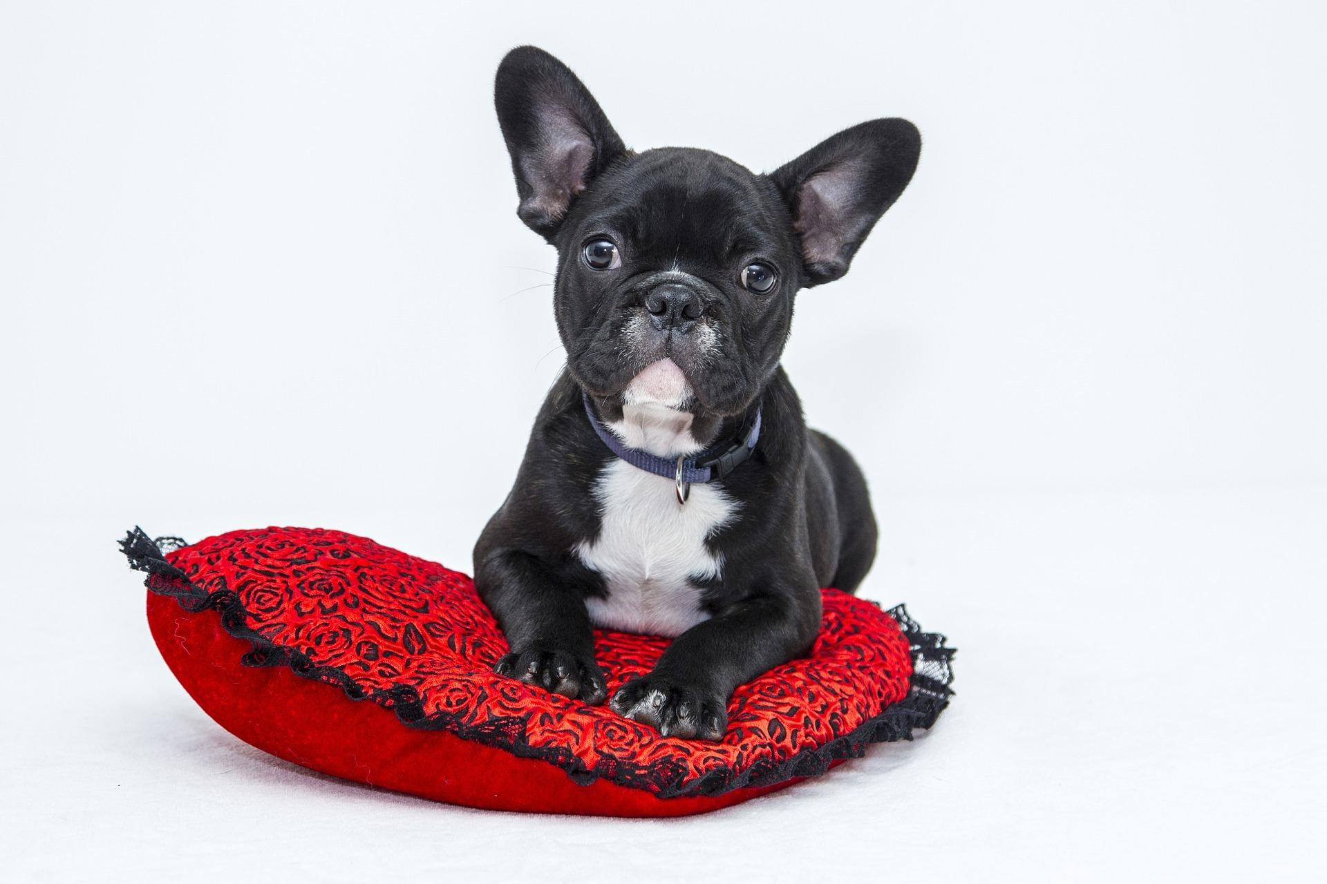 bulldog-10475181920-1588086641.jpg