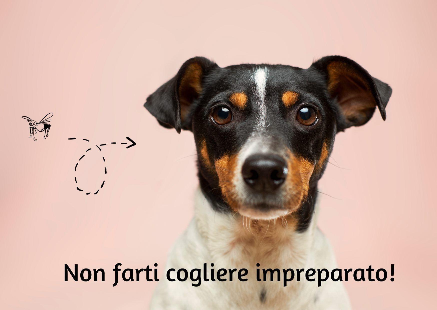 Gli antiparassitari esterni nel cane